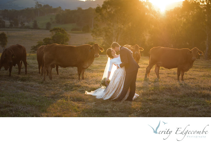 Country bride with cattle looking on