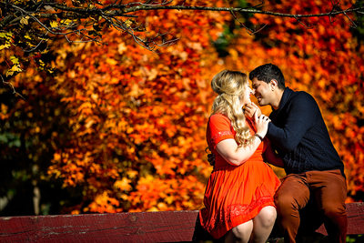 Engagement Photo With Red Maple Tree