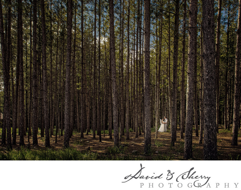 Wedding Photos in a Pine Forest