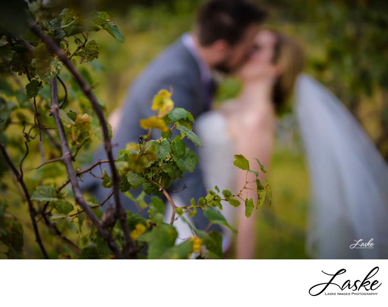 Couple kisses in vineyard