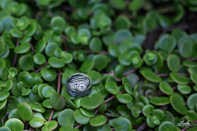 Wedding Rings Sit on The Leaves of a Plant