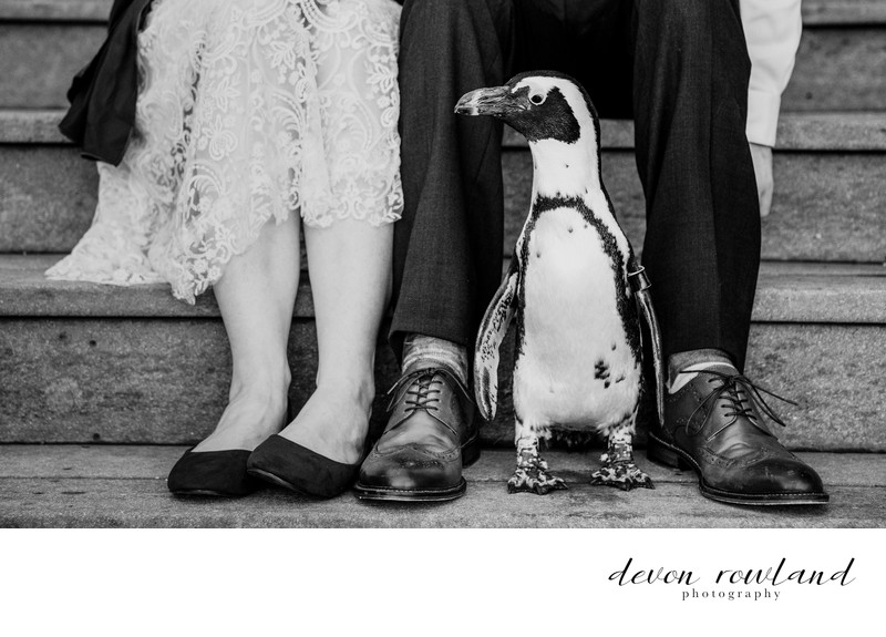 Baltimore Zoo Wedding, Featuring Special Guest Penguin!