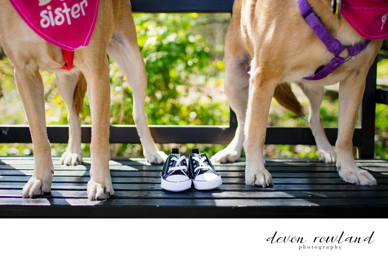Maternity session with baby Chuck Taylor's and dog feet