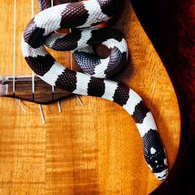 Fine Art Snake Photography for Musician Album Cover