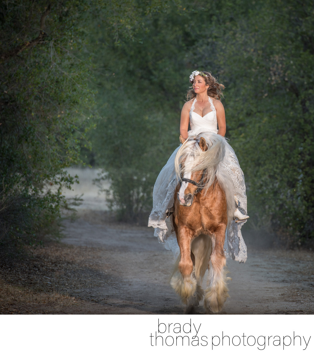 Gypsy Stallion and Bride