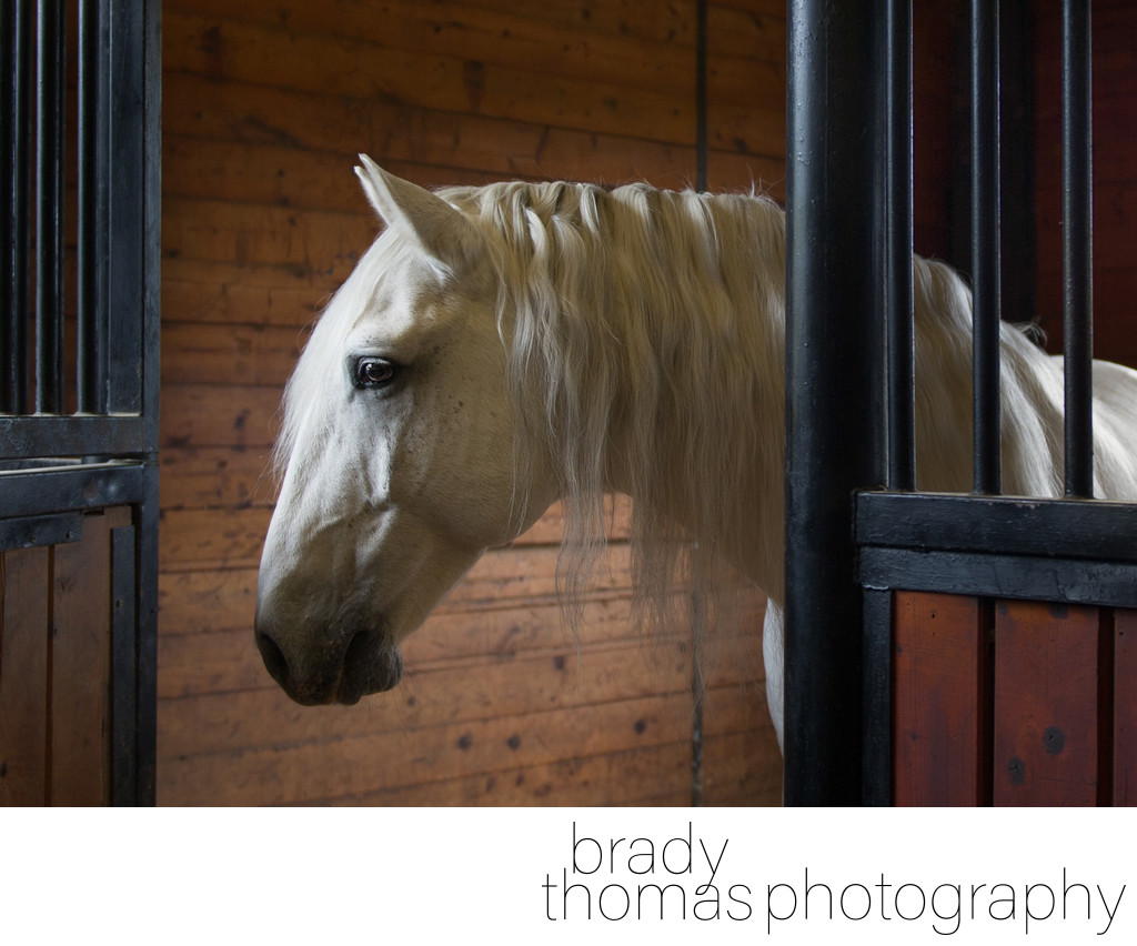 Horse Photos in Stall