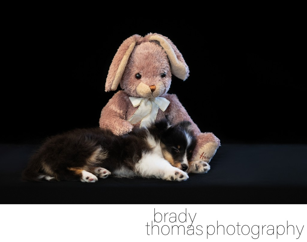 Studio Portraits of Pets