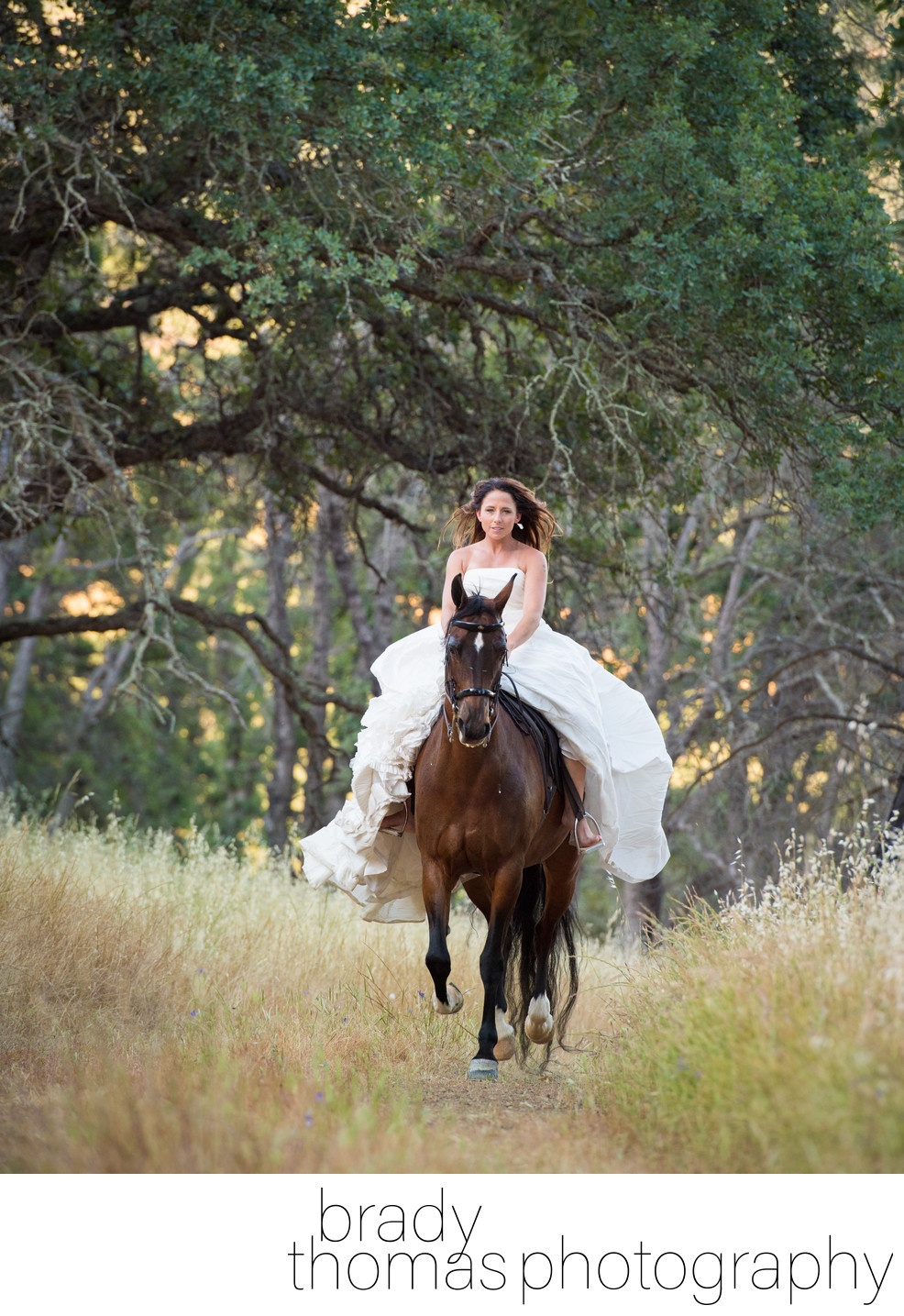 Bride and Horse Photography Clayton