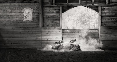 Award Winning Horse Photographer