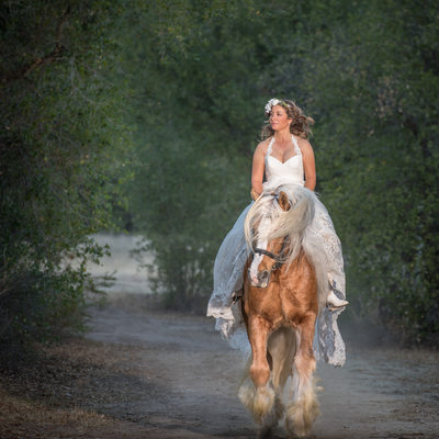 Gypsy Stallion and Bride Photograph Lafayette, CA