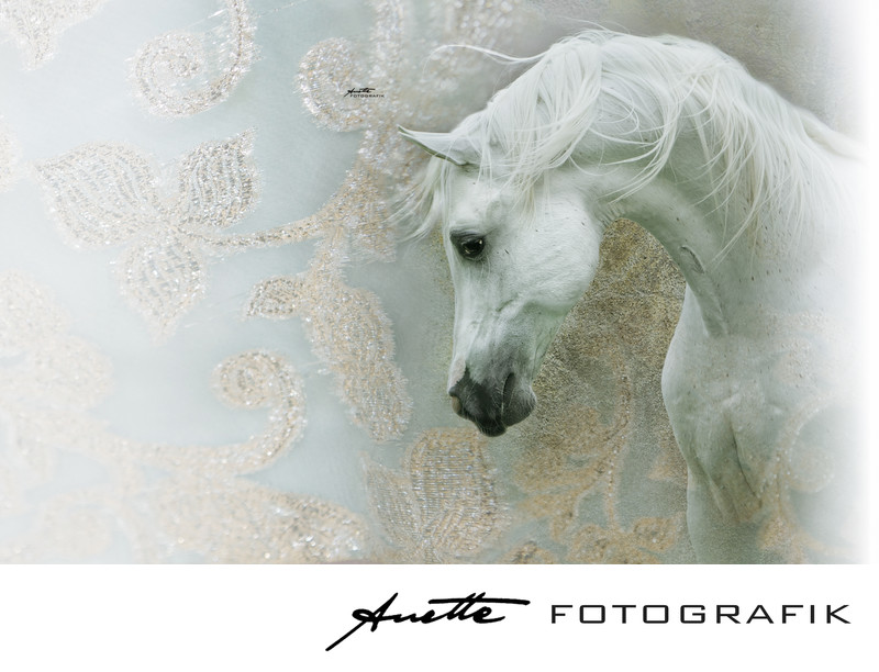 Unique arabian horse fine art photography