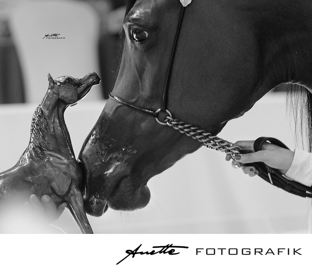 Arabian horse gold champion senior female photographer