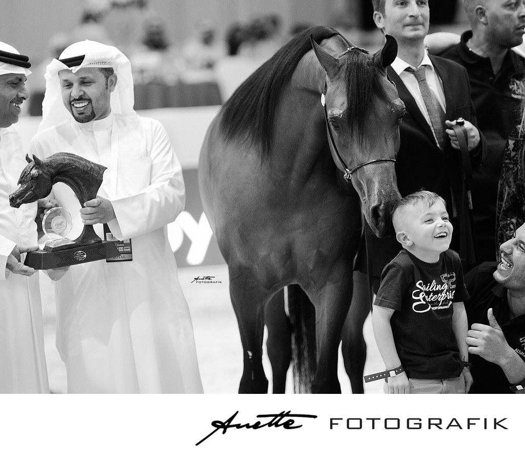 Arabian horse gold champion photography