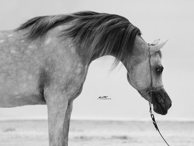 documentary fine art horse photography