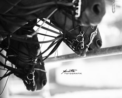 HORSE POLO PHOTOGRAPHY