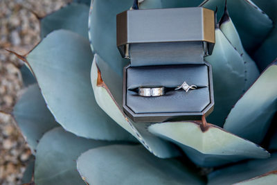 Wedding Rings in Agave