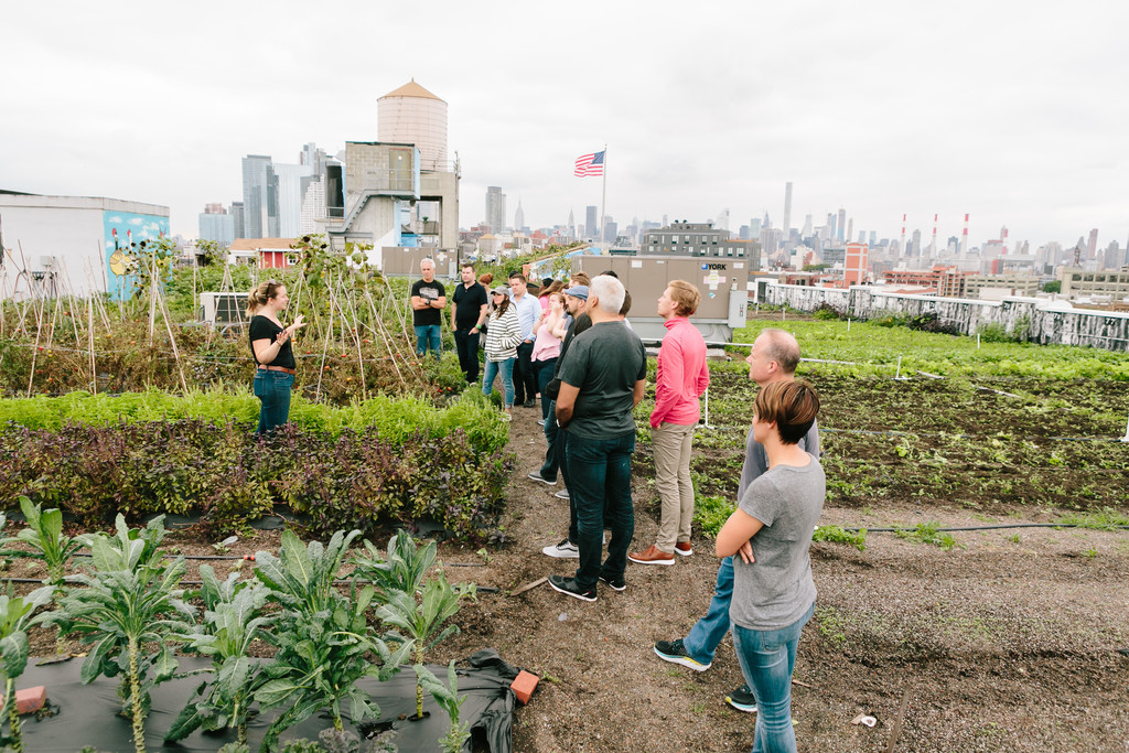 tour of Brooklyn Grange