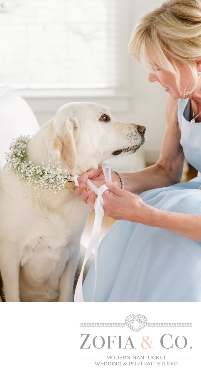 nantucket yellow lab with floral wedding wreath