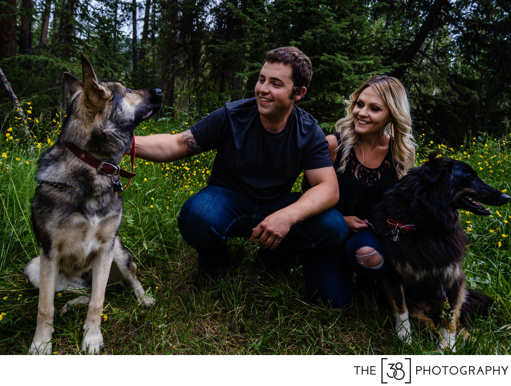 Photo of the Dogs During Engagement Session