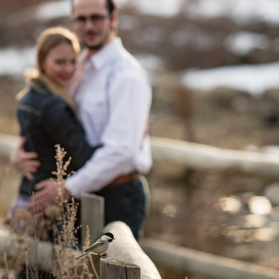 A Bird Photobombing Engagement Session