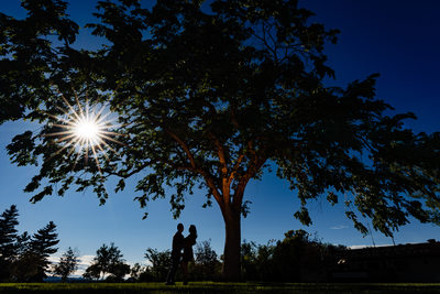 Engagement Photos Big Tree Silhouette
