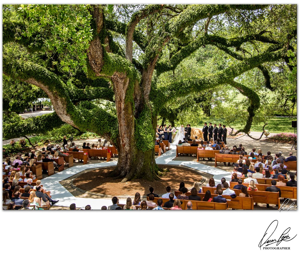 New Orleans Country Club, outdoor wedding, photographer