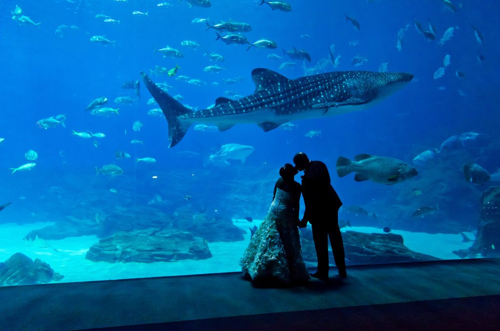 Georgia Aquarium Atlanta Wedding Photographer couple kiss