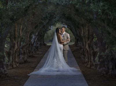 Best Sycamore Creek Wedding Photography Trees