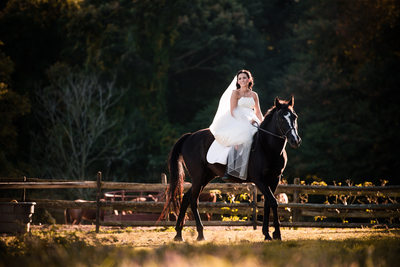 Bridal Portraits with Horse