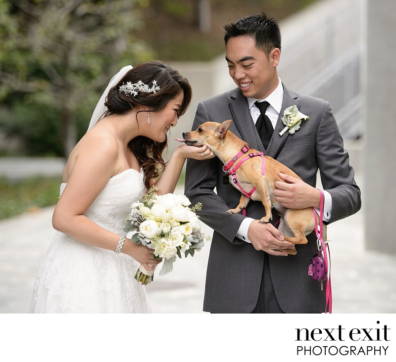 Best Los Angeles Dog Wedding Photographer
