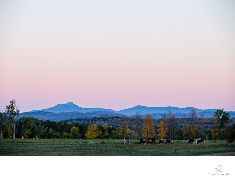 Vermont Sunset With Cows, Foliage, and the Mountains