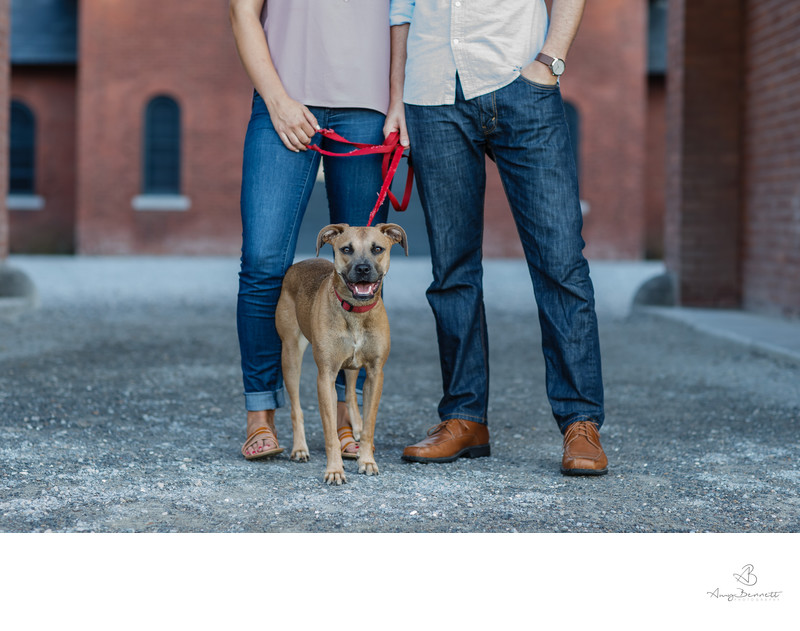 Dogs at Engagement Sessions