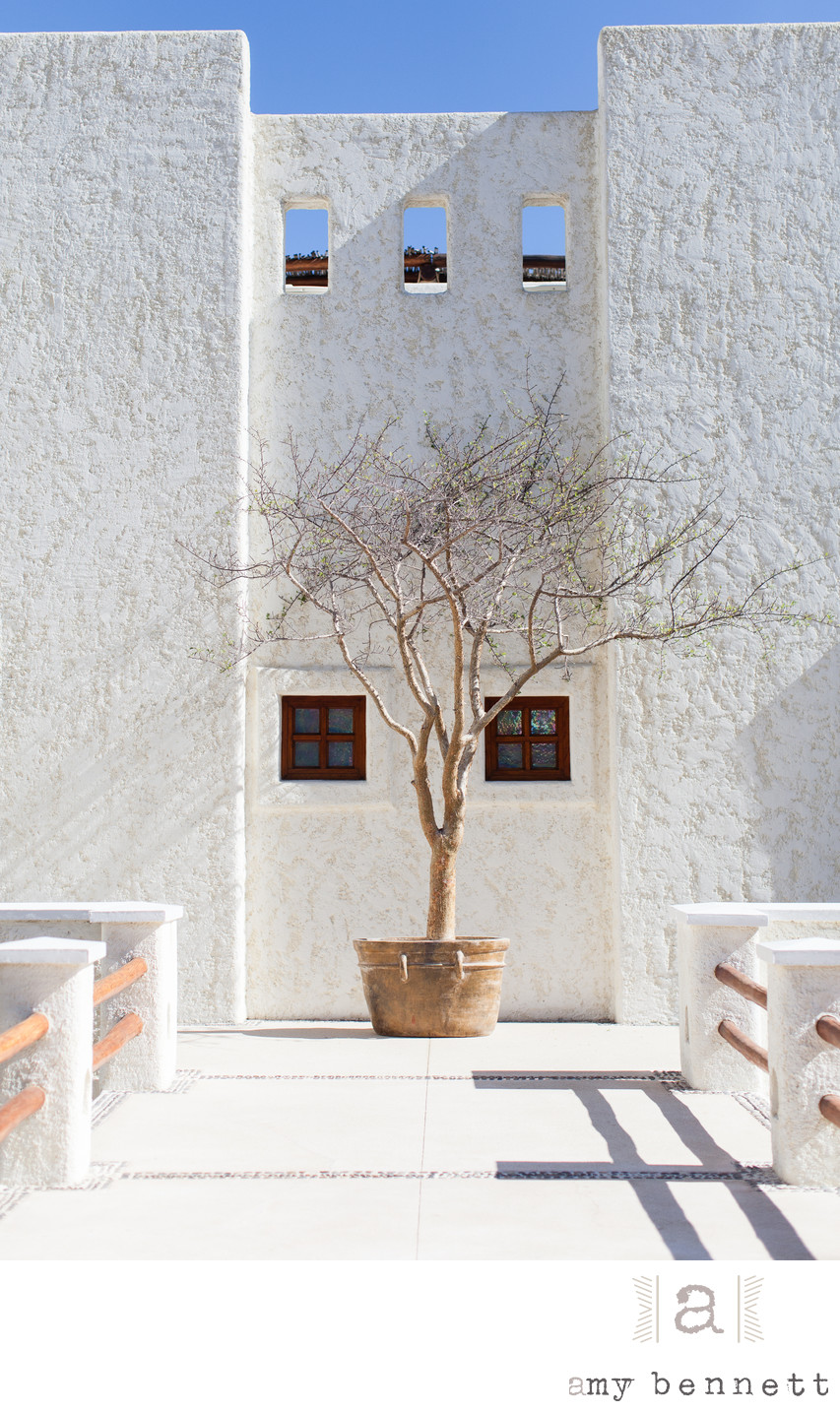 tree in a pot against white wall