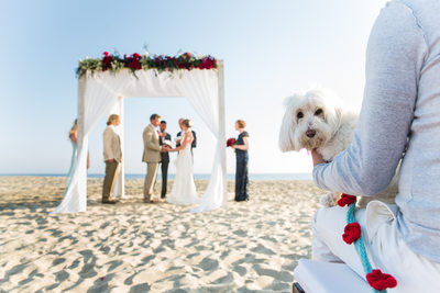 Dog at Beach Wedding