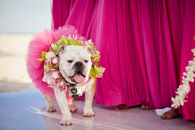 Decked Out Dog Bridesmaid