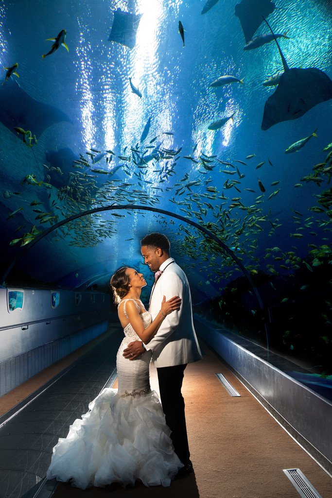 Atlanta Georgia Aquarium Wedding Photography