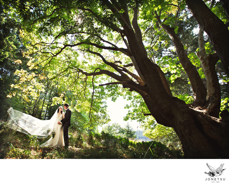 Wedding portrait Pender Island under giant tree