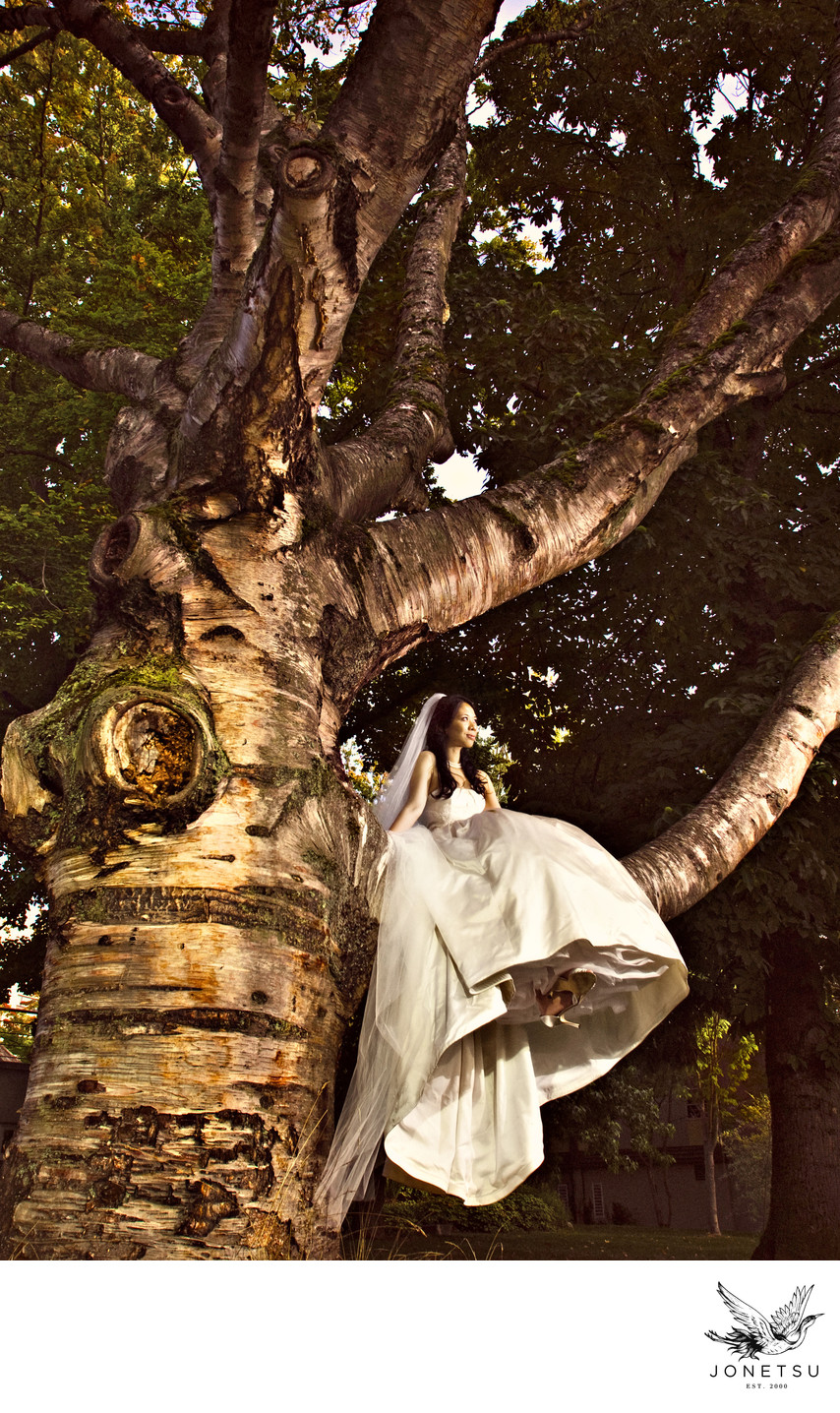Golden bride in a huge tree with amazing gown