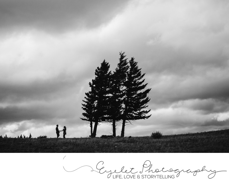 Wedding and Engagement Photos Silhouette with Trees CNP