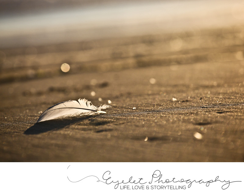 Feather on the Beach at Sunset Pacific Coast