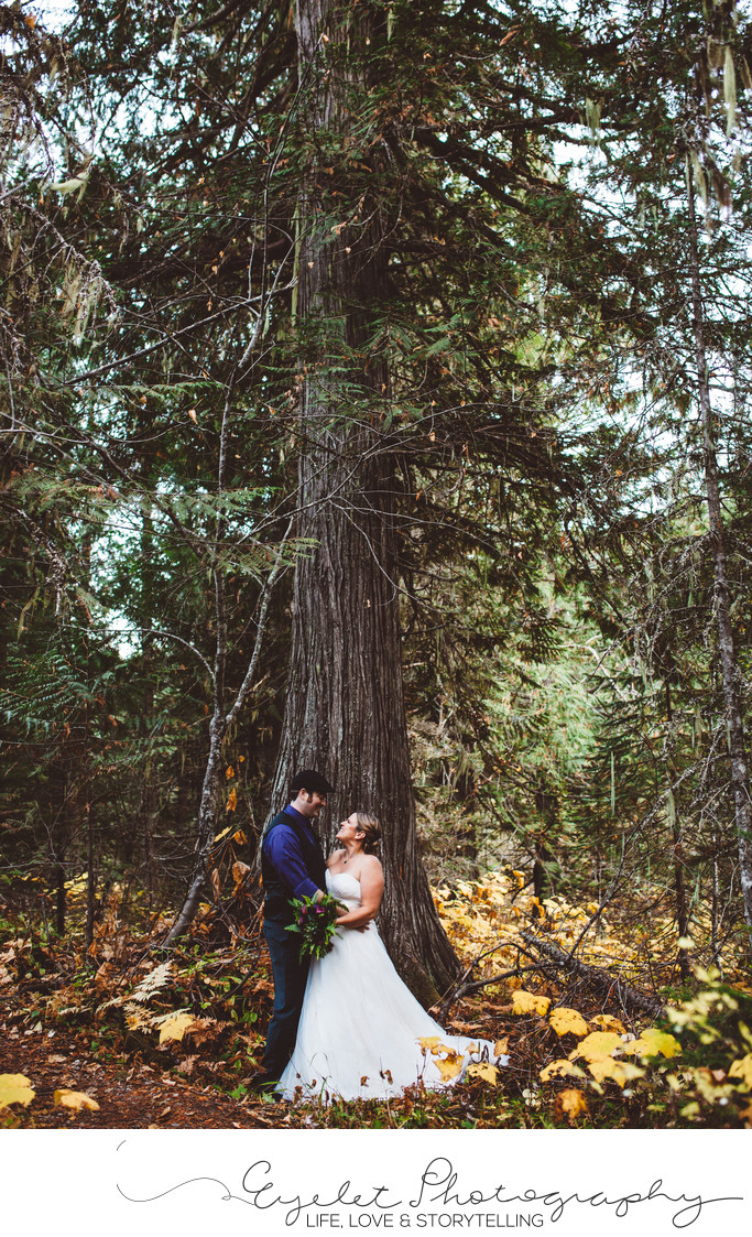 Island Lake Lodge Weddings Fernie Red Cedar Trees