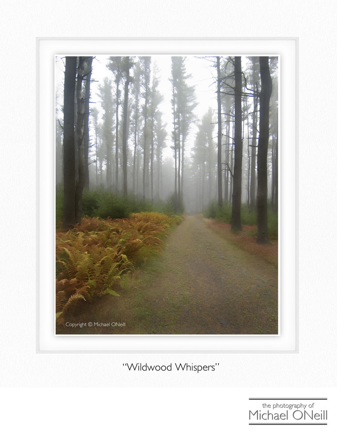 Collectible Fine Art Photography Pocono Mountains PA