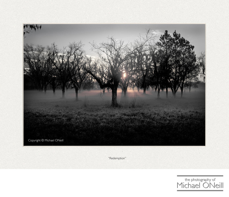 Collectible Fine Art Photography Florida Orange Grove