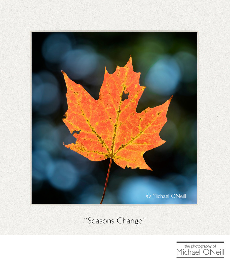 Single Orange Leaf in Autumn Collectible Fine Art Photography