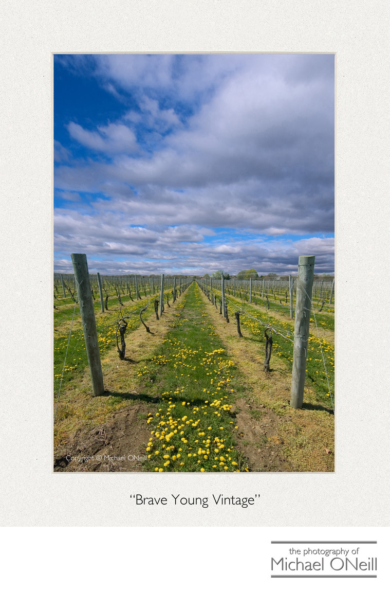 Collectible Fine Art Photography Hamptons NY Vineyard