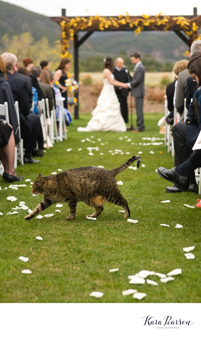 Cat Walking Thru Wedding Ceremony At Crooked Willow Farms