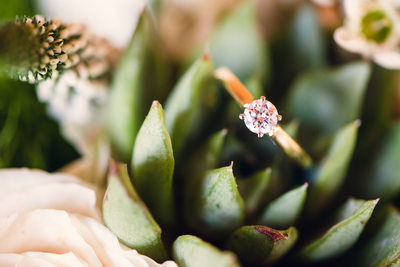 Succulent bouquet albuquerque wedding photographer