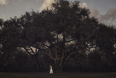 Bride and Groom under a tree on their wedding day at St Johns Country Club