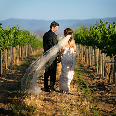 Ponte Winery Bride and Groom Portraits