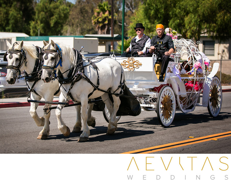 Horse and carriage at Sikh wedding in San Diego